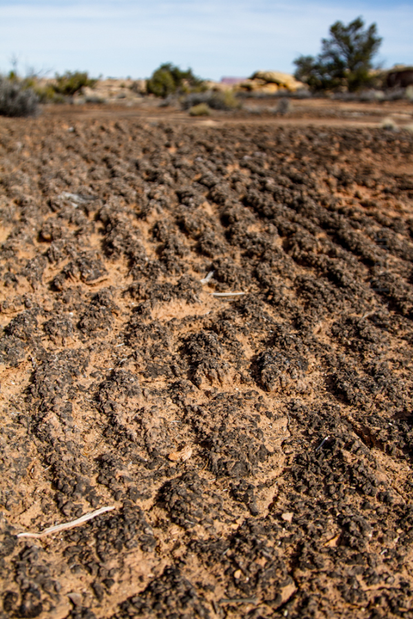 Desert Soil Canyonlands