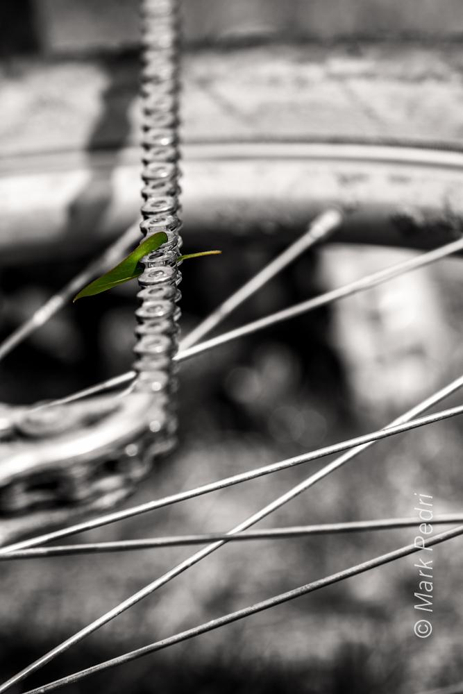 Bike Nature Chain Leaf Green