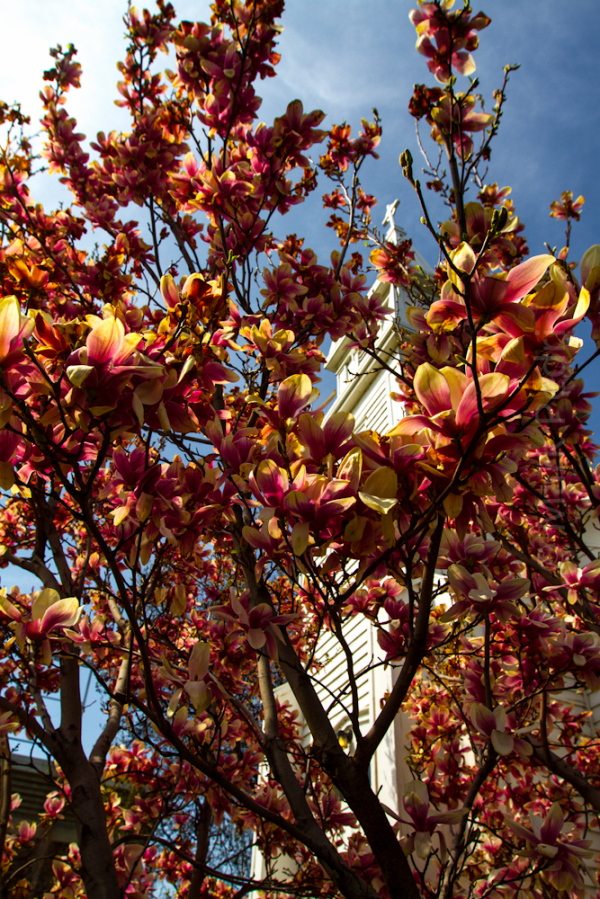 boise, Idaho, church, spring, Street