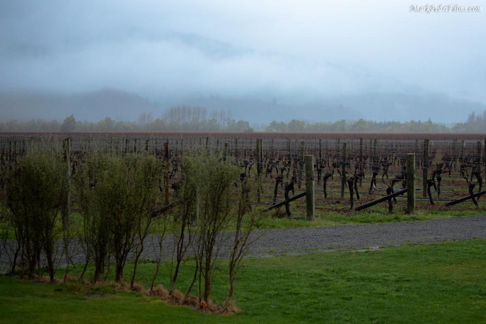 New Zealand, Wine