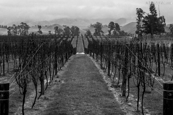 New Zealand, Wine Country, Grapes