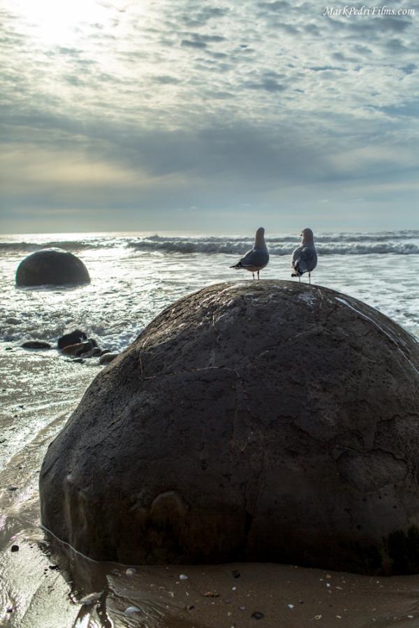 Sea Gull, Friends, Sunset, New Zealand