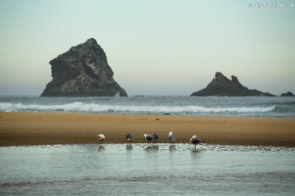 Sandfly, New Zealand, Beach, Ocean