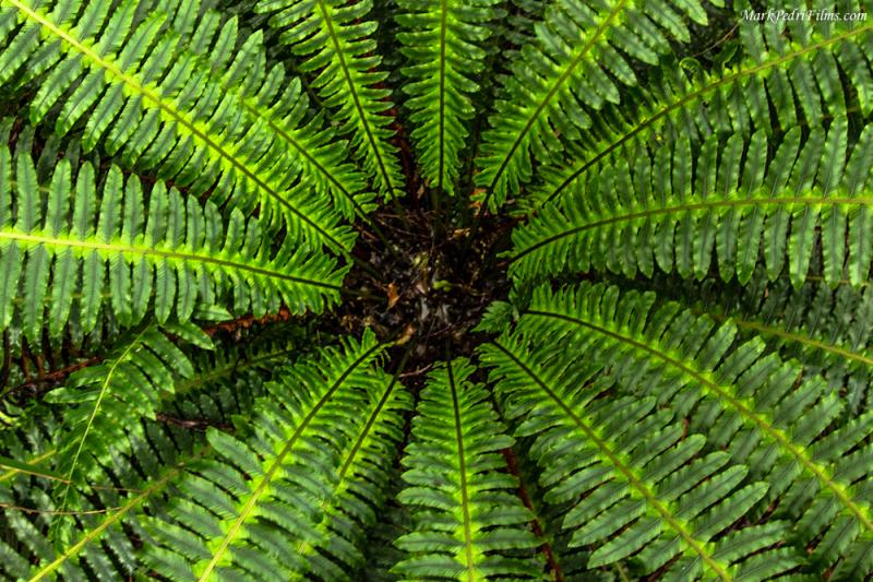 New Zealand, Fern, Green, Plants