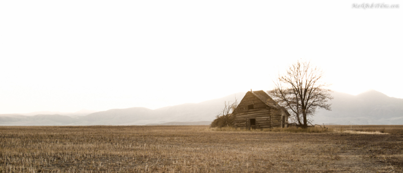 Utah, Barn, Tree, Old, Sun