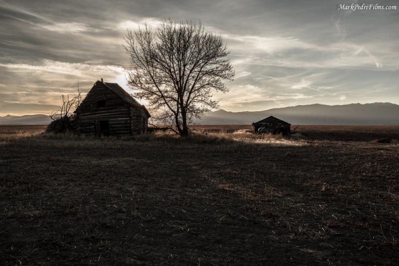 Barn, Tree, Sun