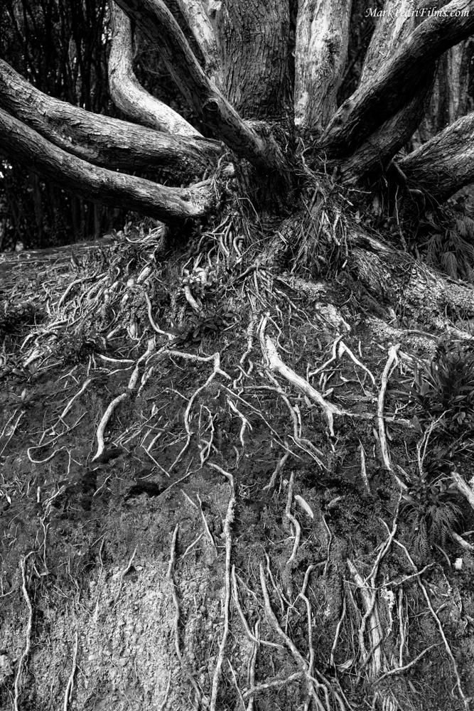 Tree, Roots, Garden