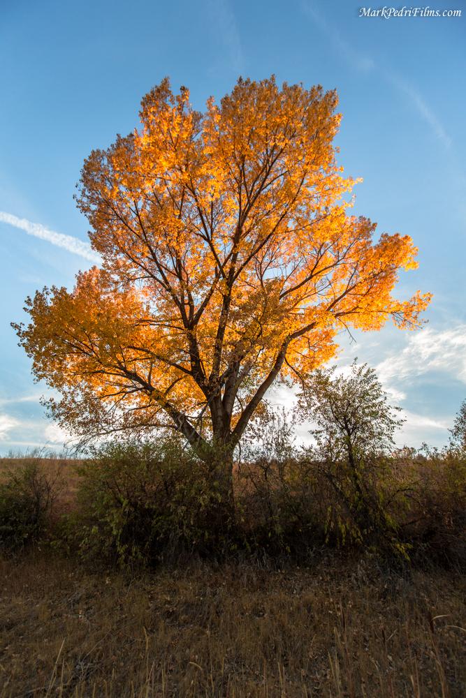 Fall, Leaves, Yellow, Utah, Tree