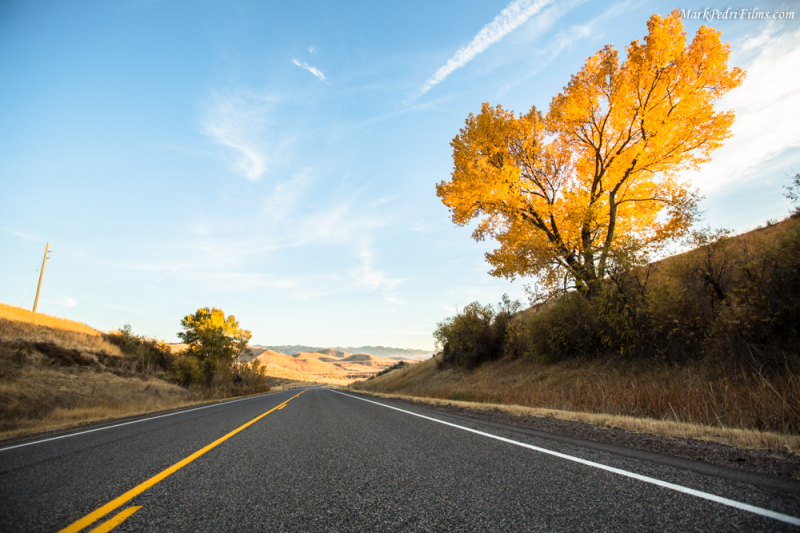 Fall, Leaves, Yellow, Utah, Tree, Road Trip