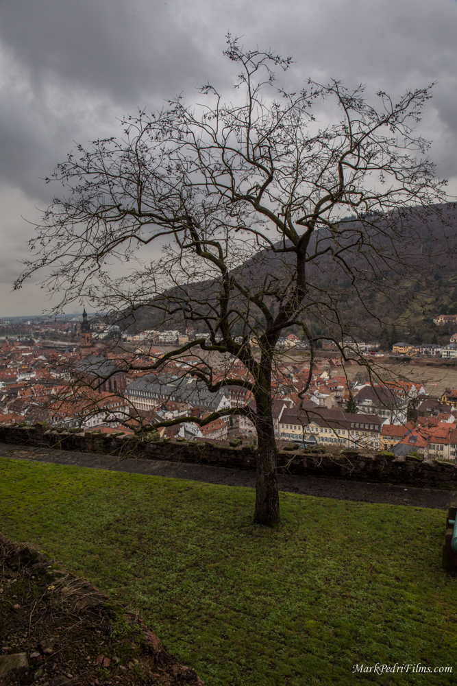 Heidelberg, Tree, Schloss, Castle