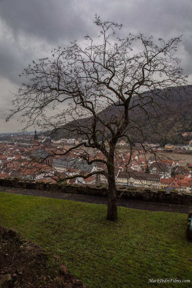 Heidelberg, Tree, Schloss, Castle