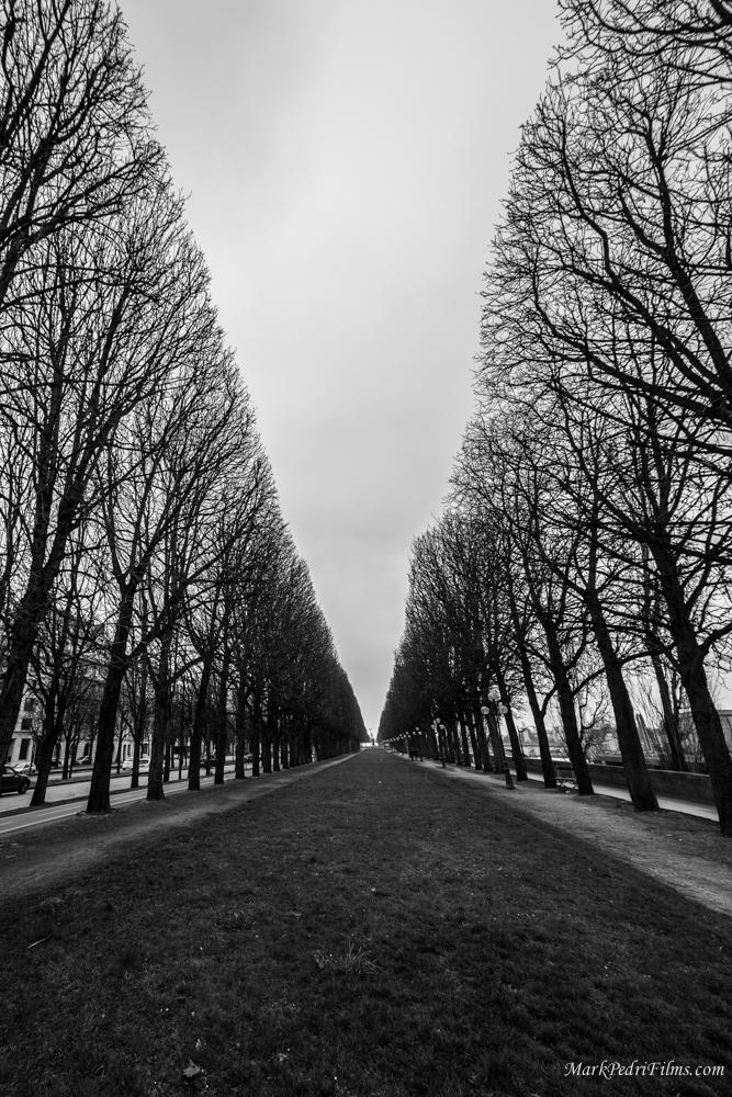 Paris, France, Trees