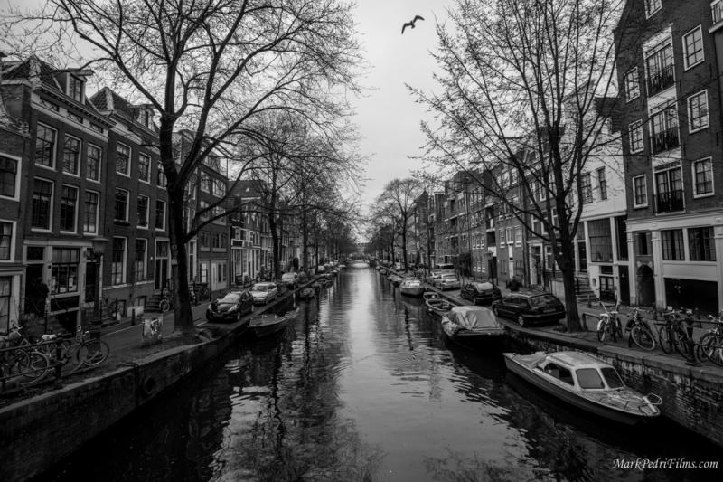 Amsterdam, Bird, BW, Canal