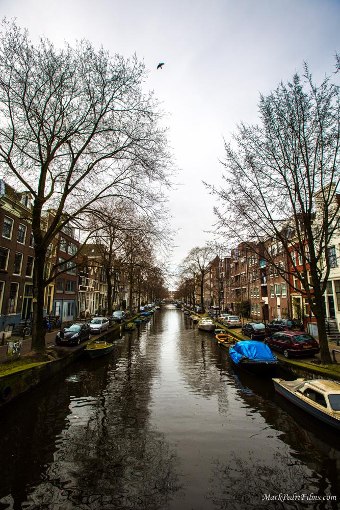 Amsterdam, Bird,  Canal