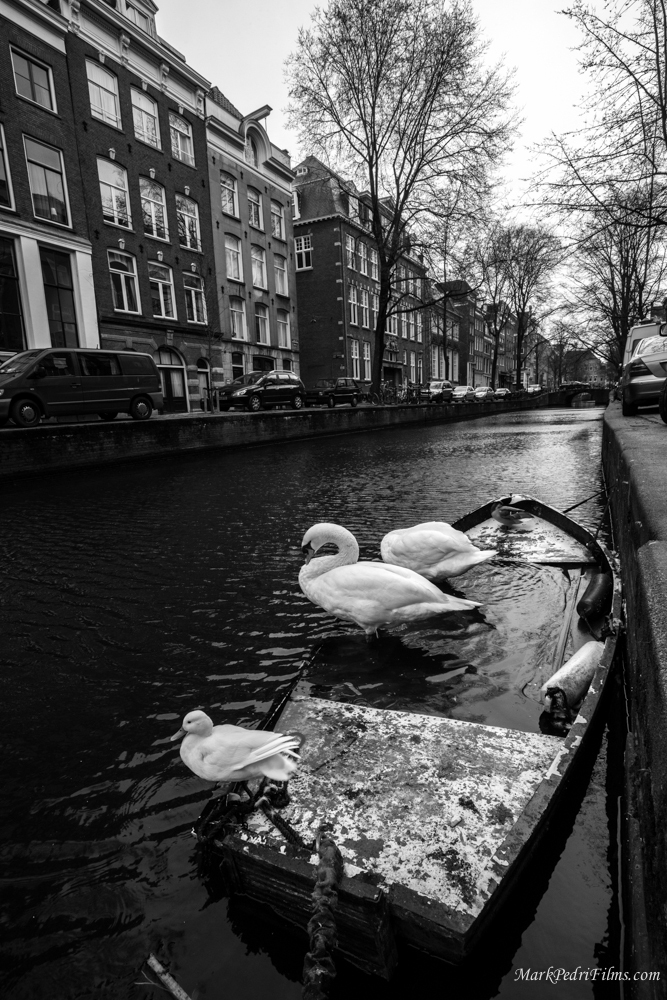 Amsterdam, Canal, House, Road