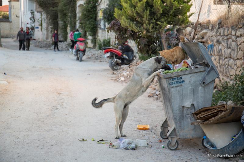 Dog, Turkey