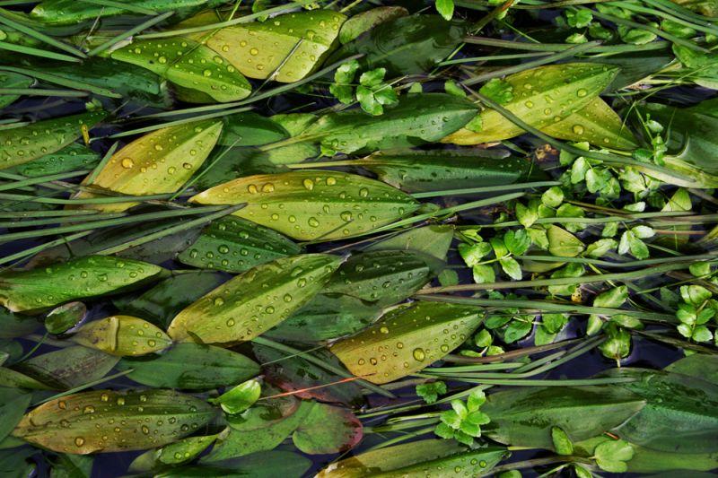Stream greens