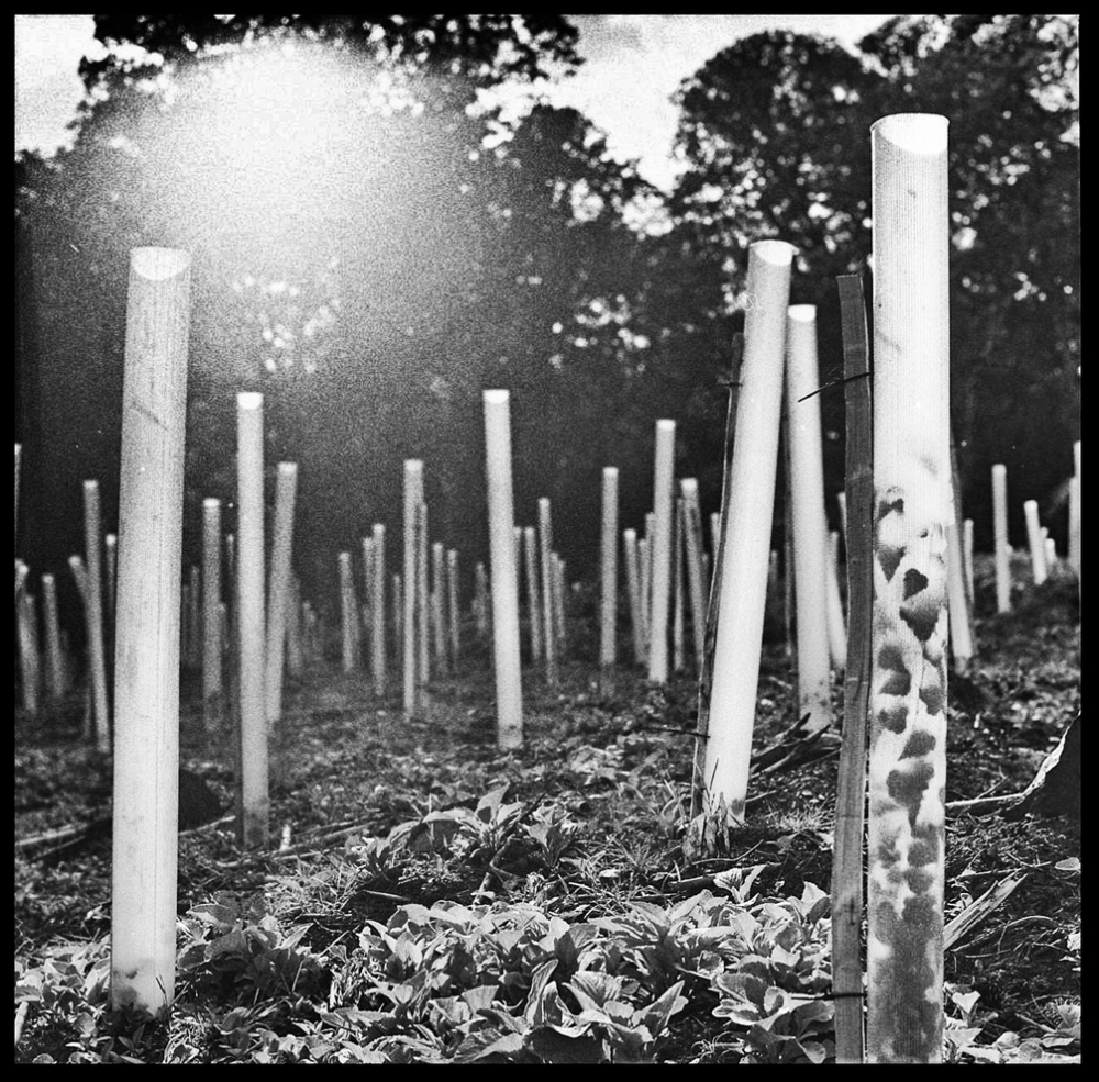 trees in tubes