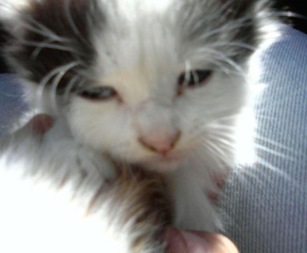 lostt Kitten 2