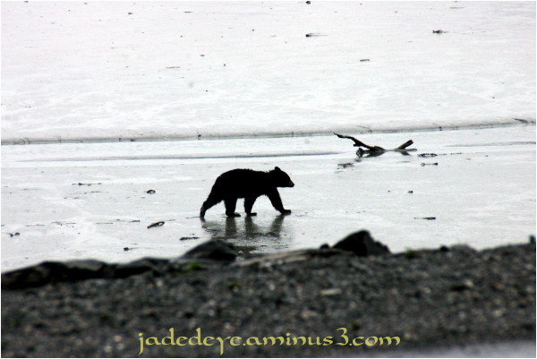 Baby Bear On The Beach