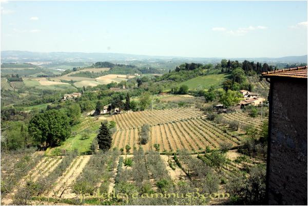 Tuscan Hills #3