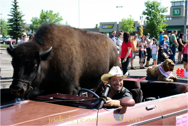 Baily D. Buffalo Jr