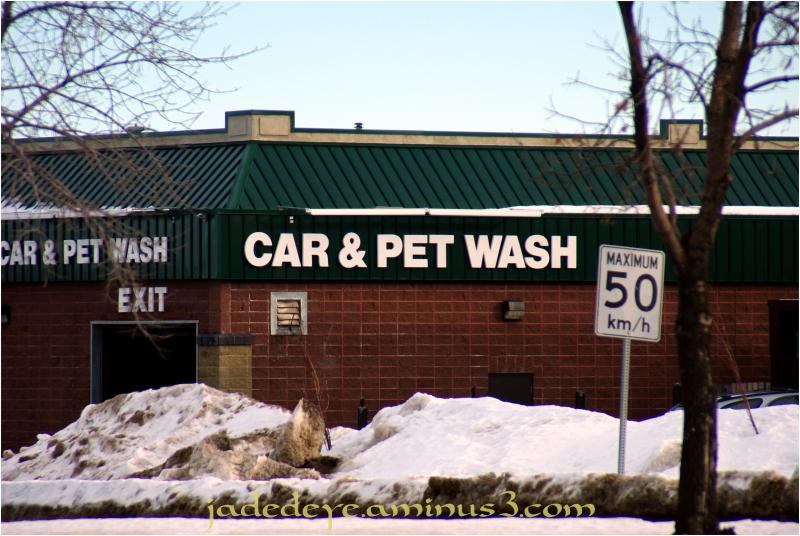 Car & Pet Wash