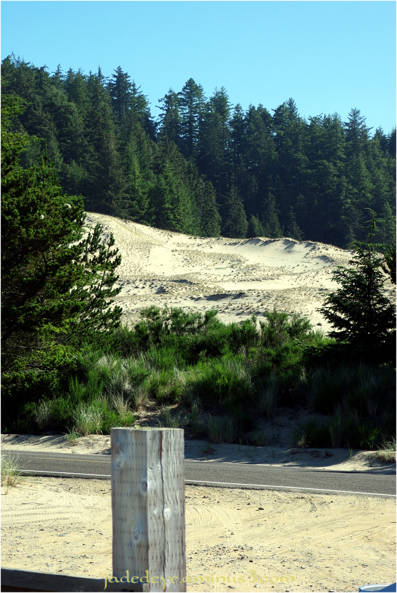 Oregon Dunes National Recreation Area #4