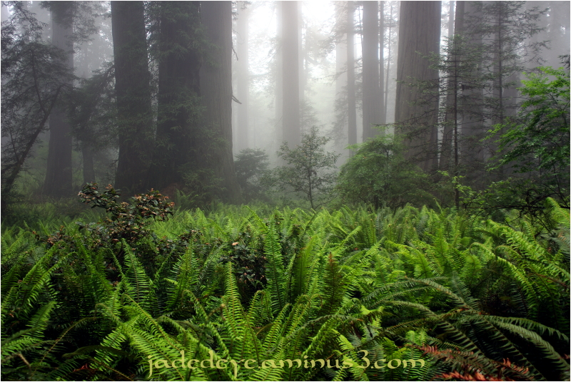 Forests From Ferns