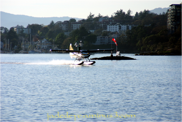 Victoria Harbour Water Airport