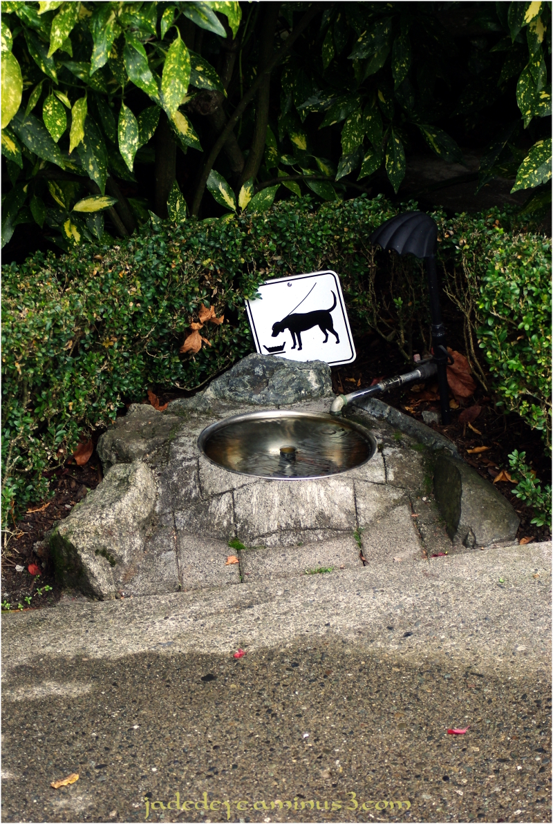 Dog Fountain