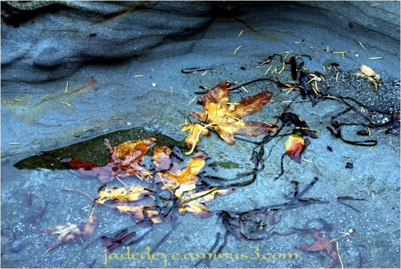 Tidal Colour