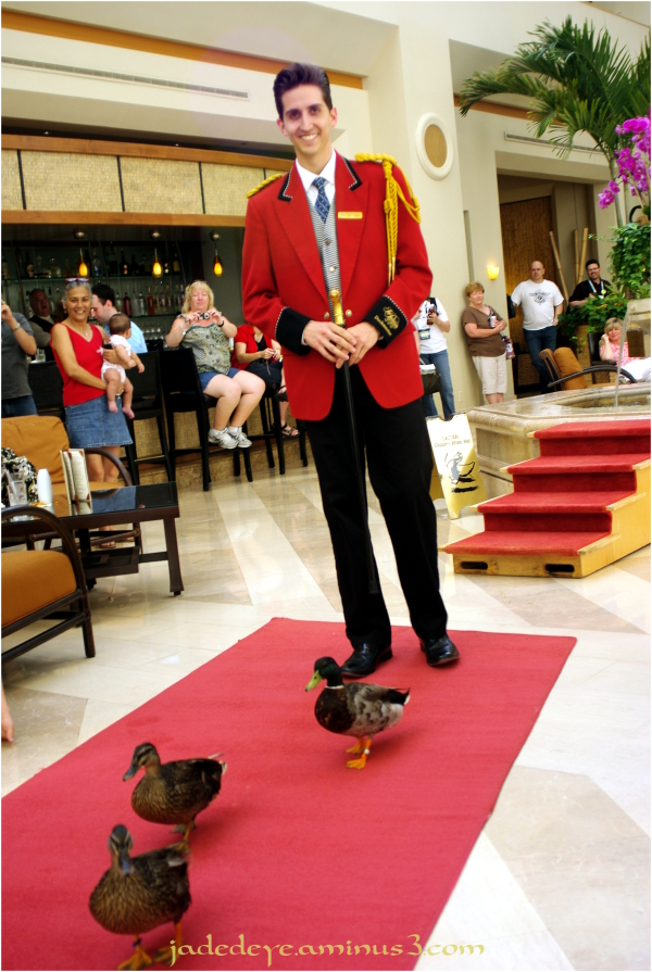 Duckmaster & His Charges