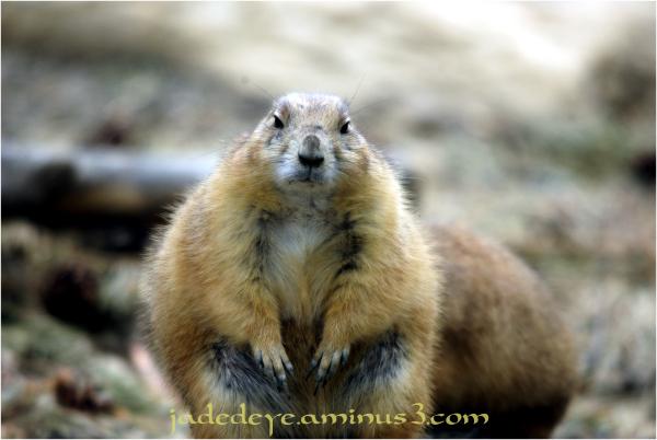 Does This Fur Coat Make Me Look Fat??