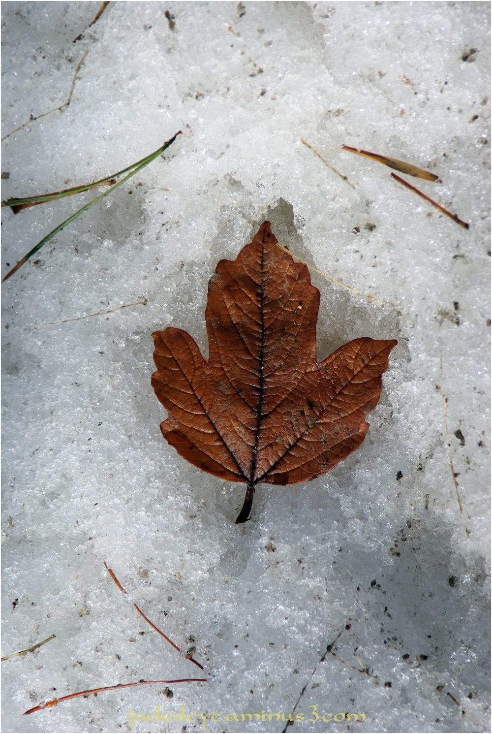 Leaf on Ice