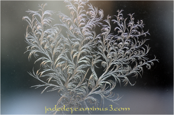 Frost Crystals I
