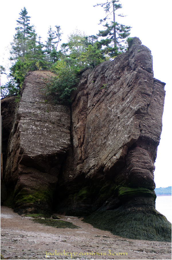 Hopewell Rocks #6