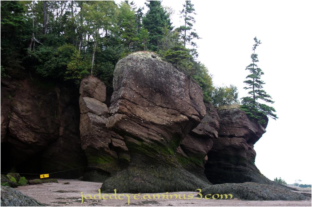 Hopewell Rocks #8