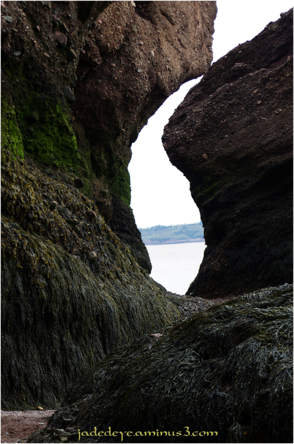 Hopewell Rocks #11