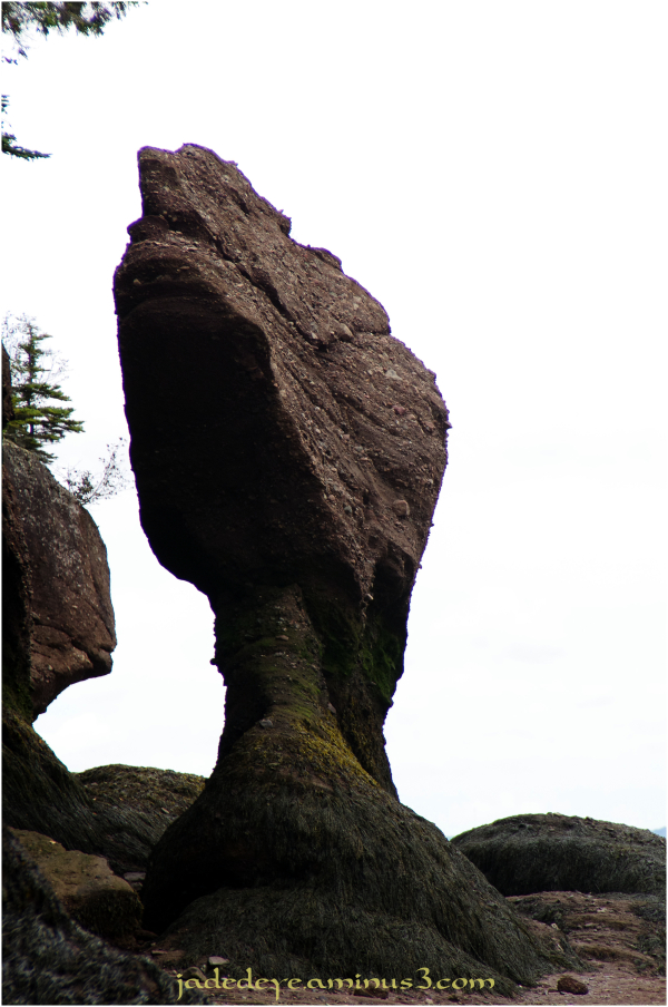 Hopewell Rocks #12