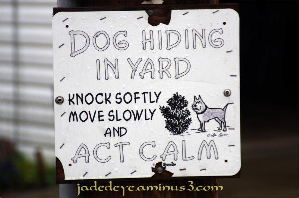 Dog Hiding In Yard!!