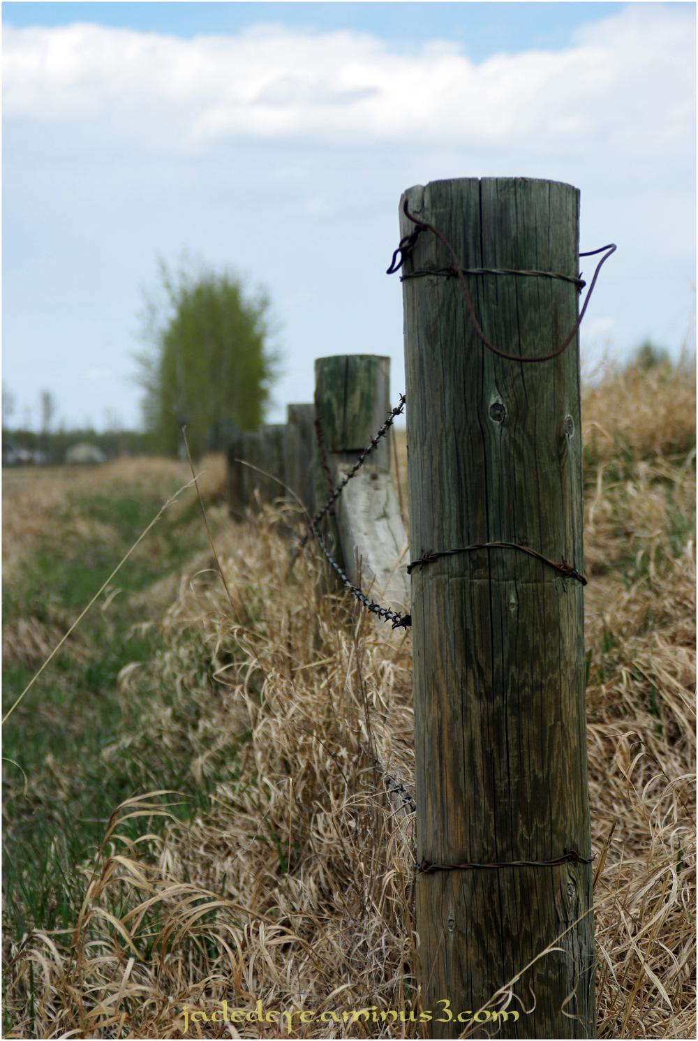 Prairie Fence Line #1