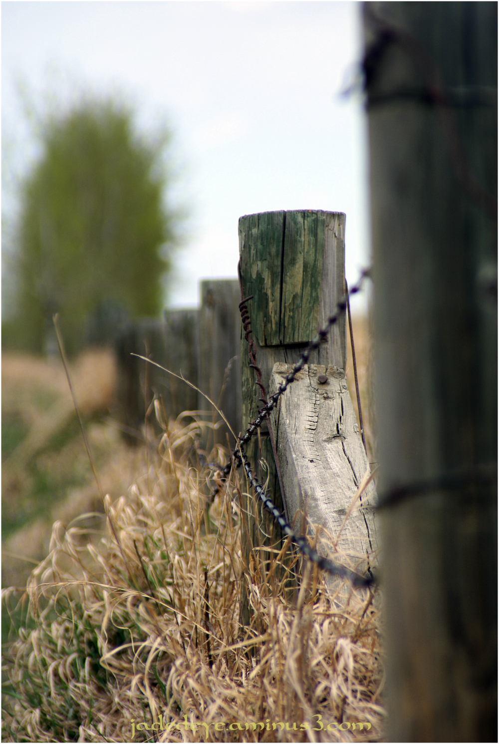 Prairie Fence Line #2