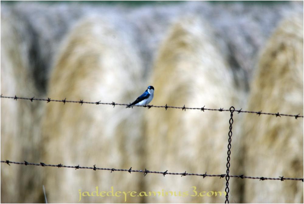 Prairie Fence Line #5