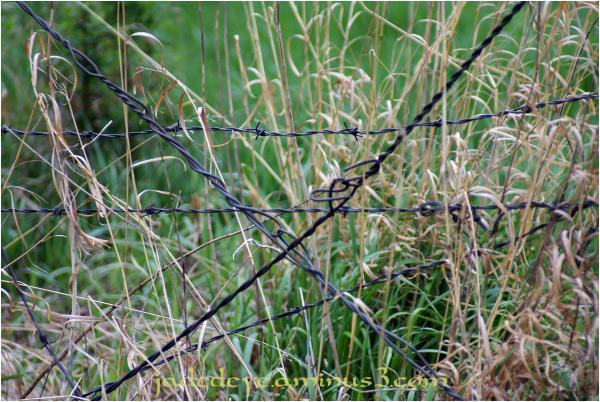 Prairie Fence Line #10