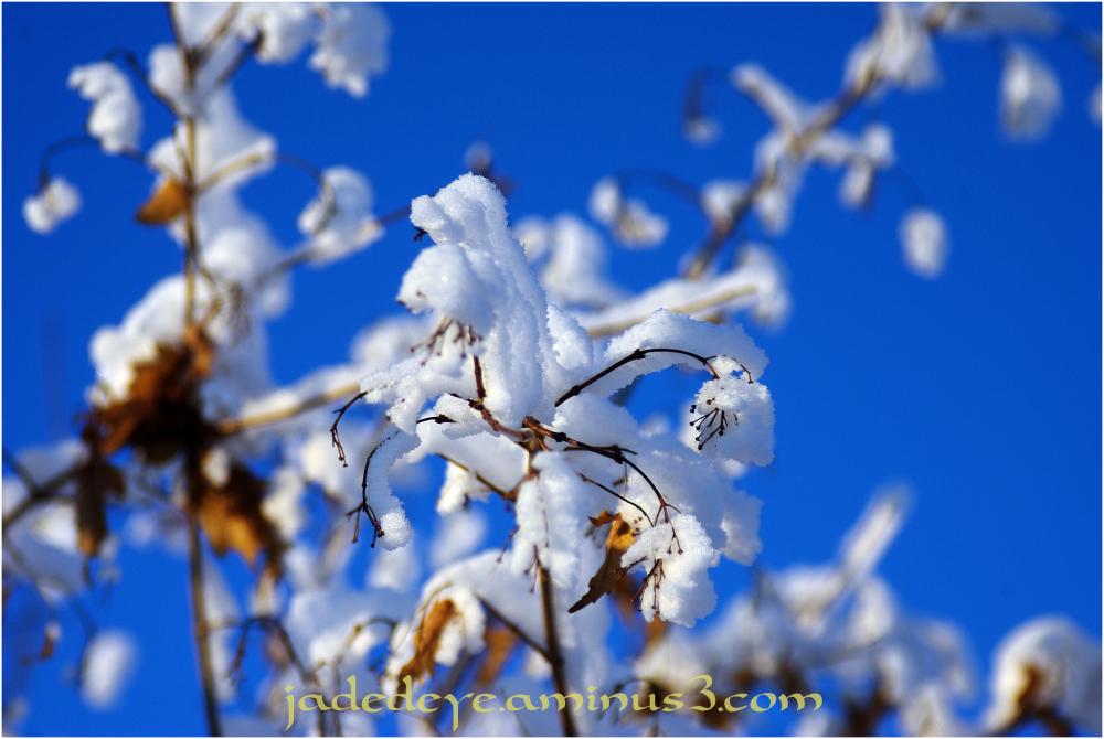 Winter Wonderland #8