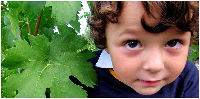a small child in the vineyard