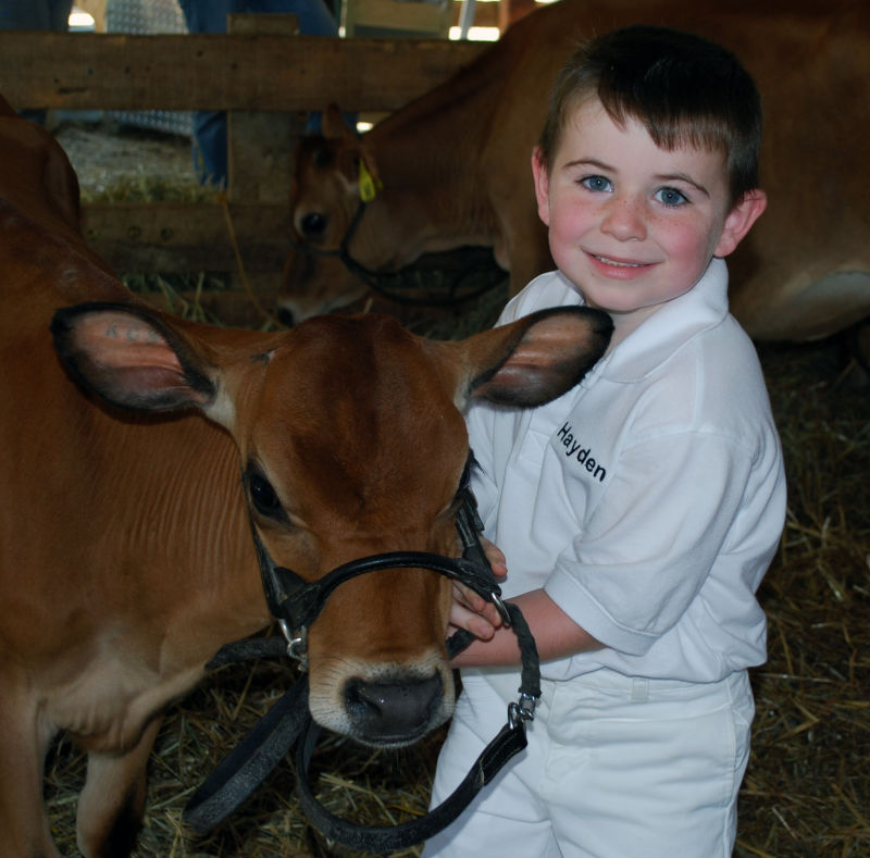 cow child fair