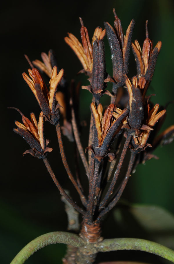 plant winter