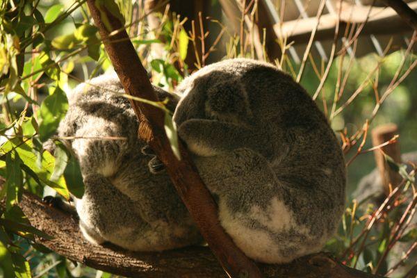 Koala Sanctuary